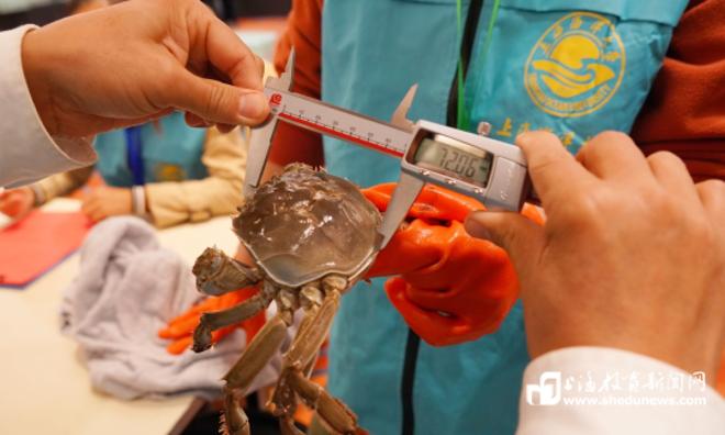 """海洋大学蟹文化节:近2500只河蟹参与角逐,""""蟹王""""重达657.7克"""