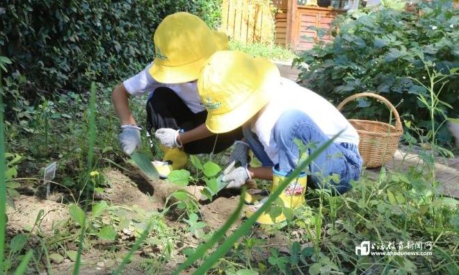 """把幼儿课堂搬进大自然 上海这个区的""""大视野""""特色课程不一般!"""